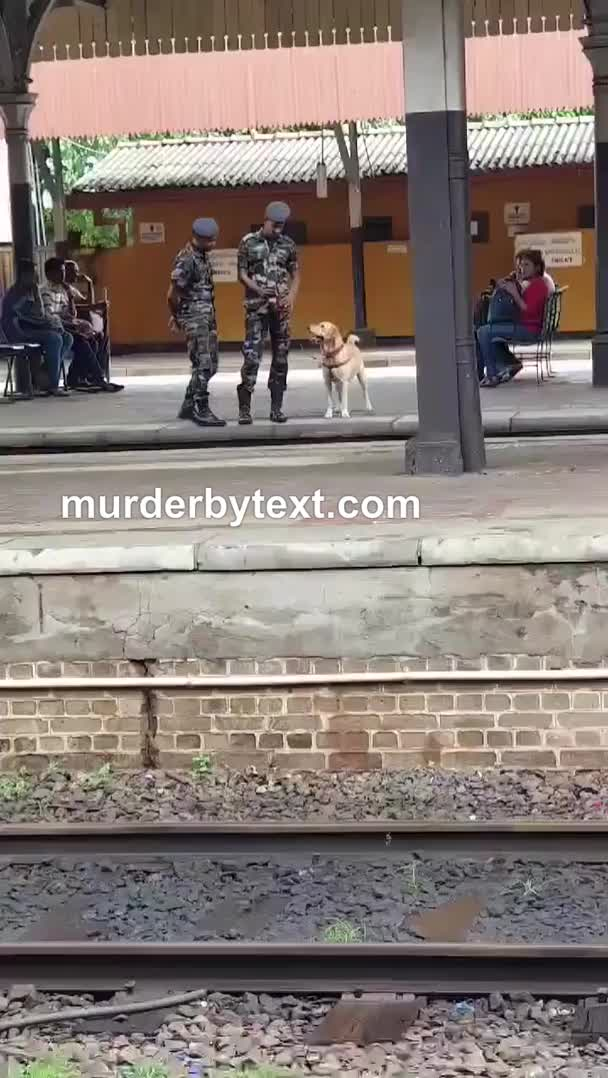 Watch and share Army Boi Does The Hops GIFs by Murder By Text on Gfycat