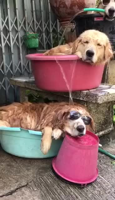 dogs, So there's been a heatwave in Europe and... GIFs