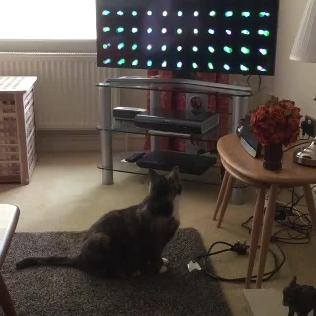 Video by gillmerritt GIFs
