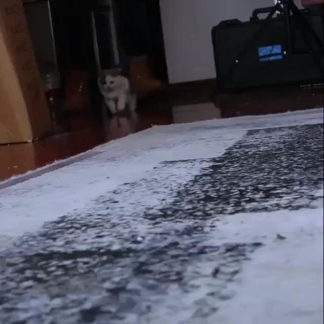 """""""Wait wait wait..."""" mademesmile aww animaltextgifs GIF"""