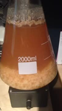 homebrewing, WLP007 Dry English Ale Yeast GIFs