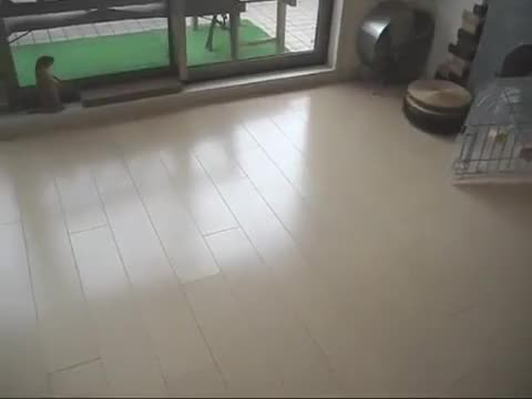 Watch and share Roombaww GIFs on Gfycat