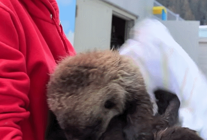 gifsofotters, Can't stop won't stop wiggling GIFs