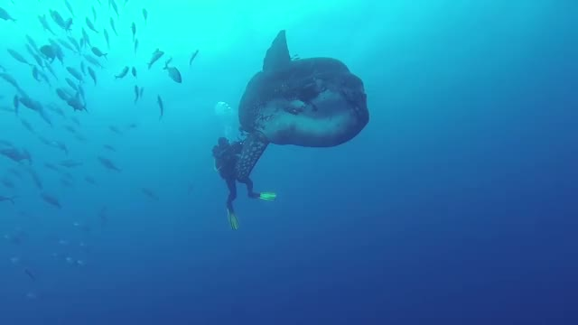 Watch and share Scuba Diving GIFs and Nature GIFs by GlobalSweet on Gfycat