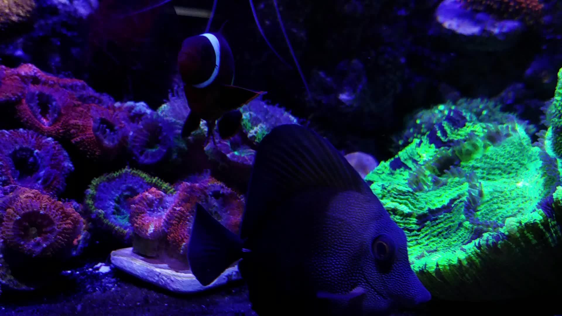 aquariums, reeftank, Reef Tank Kidcvlt GIFs