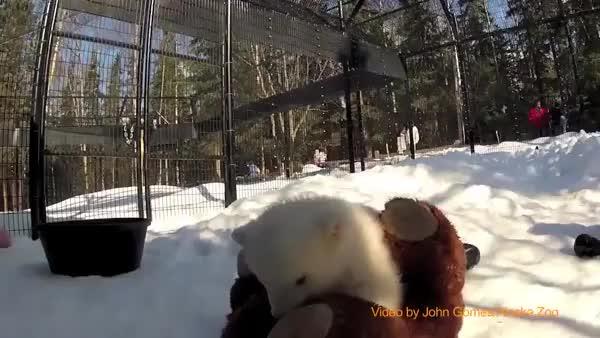 Watch and share Bearcubgifs GIFs on Gfycat