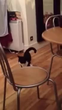 Watch cat jumper GIF on Gfycat. Discover more cat GIFs on Gfycat