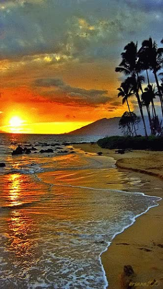 Watch and share Paysage Paradisiaque, Mer, Plage, Coucher De Soleil, Palmiers GIFs on Gfycat