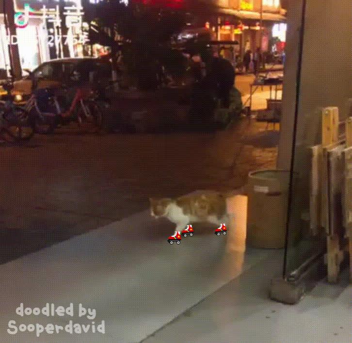 cat, doodle, funny, rollerskates, roller skating is hard GIFs