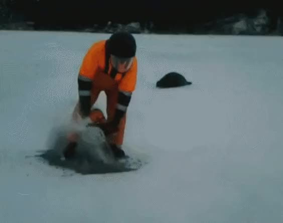 Watch Opening a door for a stranded seal (reddit) GIF on Gfycat. Discover more gifs, humansbeingbros GIFs on Gfycat