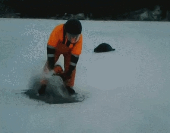 gifs, humansbeingbros, Opening a door for a stranded seal (reddit) GIFs