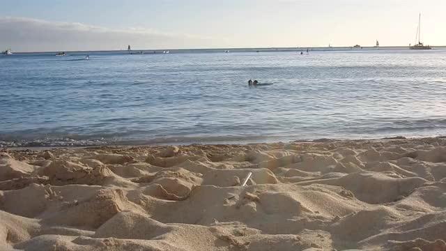 Watch and share Naturegifs GIFs and Hawaii GIFs by bhavyareddivari on Gfycat