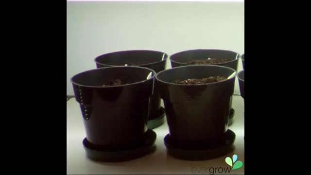 Watch and share Gardening GIFs and Grower GIFs by evergrow on Gfycat