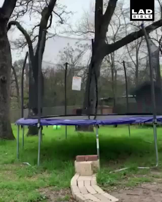 Watch 'This cat got stuck on my trampoline today...' 😂😂 GIF on Gfycat. Discover more LADbible GIFs on Gfycat