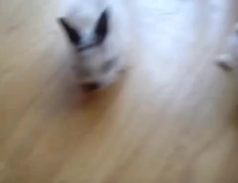 Watch rabbits GIF on Gfycat. Discover more rabbits GIFs on Gfycat