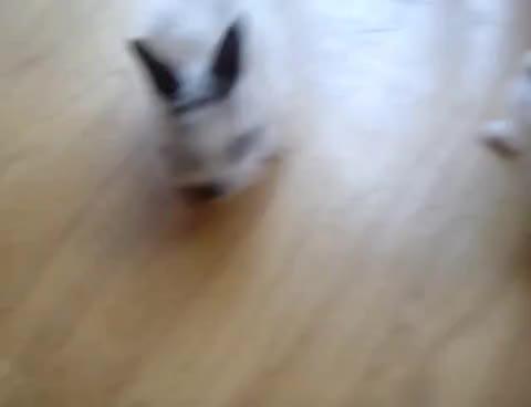 rabbits, rabbits GIFs