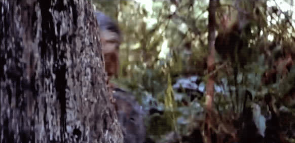 chewbacca, hello, hi, lurking, oh hello, return of the jedi, spying, star wars, surprise, Chewbacca Lurking GIFs