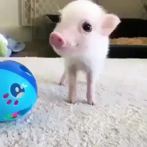 Watch and share Lil Bacons GIFs and Gift GIFs by Sanamjaan on Gfycat