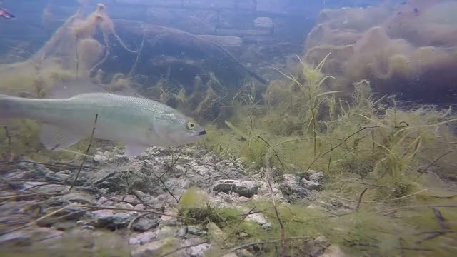 Watch and share Bass Fishing GIFs on Gfycat