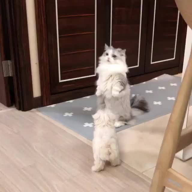 Watch and share Cat GIFs and Dog GIFs by awkwardtheturtle on Gfycat