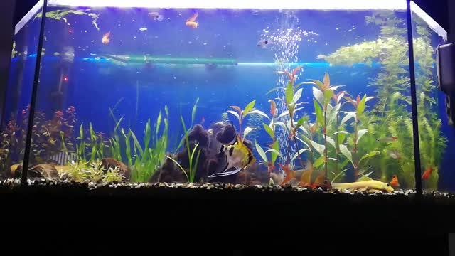 Watch and share VID Aquarium James GIFs on Gfycat
