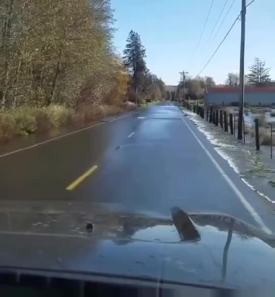 Watch and share Salmon Crossing GIFs on Gfycat