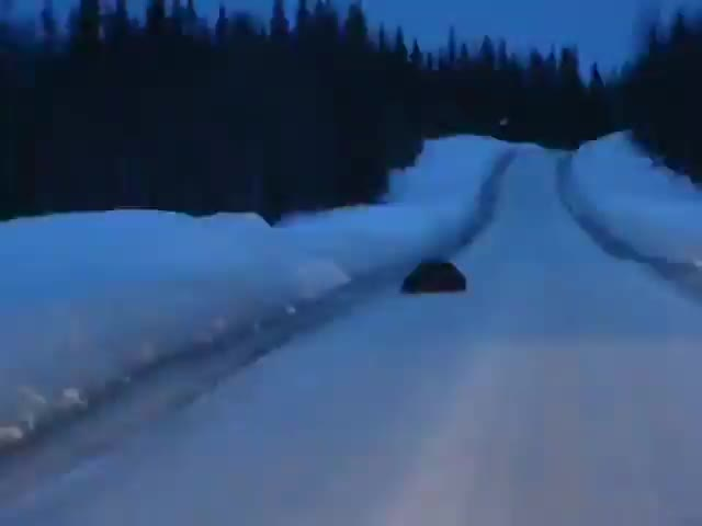 animals, nature, Wolverines fighting on an icy road GIFs