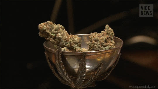 Vice Cannabis - Amsterdam GIFs