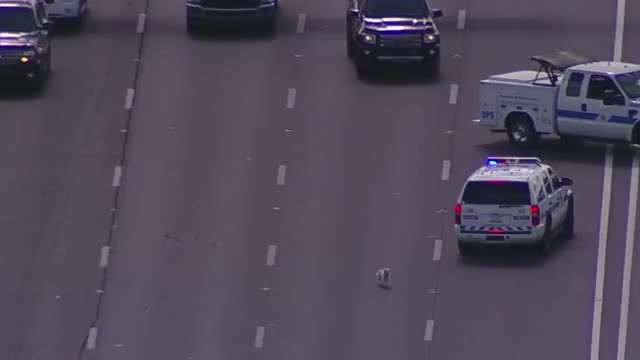Watch and share Dog Chase On I-17 Freeway In Phoenix, Arizona 1 GIFs on Gfycat