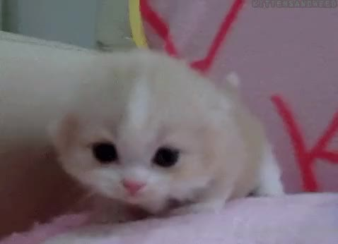 Watch and share Meow GIFs on Gfycat