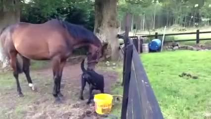 Watch and share Animal GIFs and Viral GIFs by PM_ME_STEAM_K3YS on Gfycat