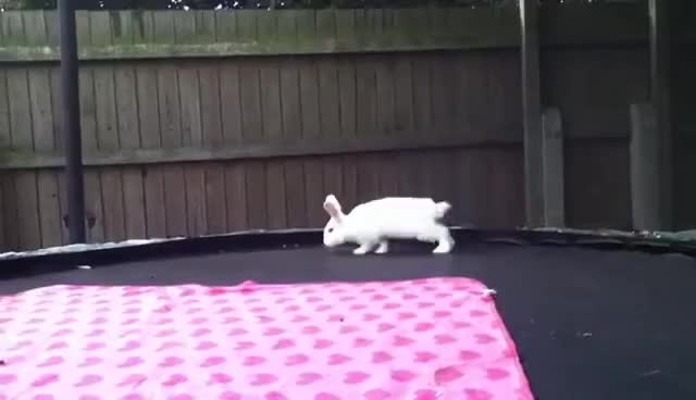 Watch this trending GIF on Gfycat. Discover more rabbit binky GIFs on Gfycat