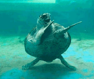 animals, dab, tortoise, turtle, turtle GIFs