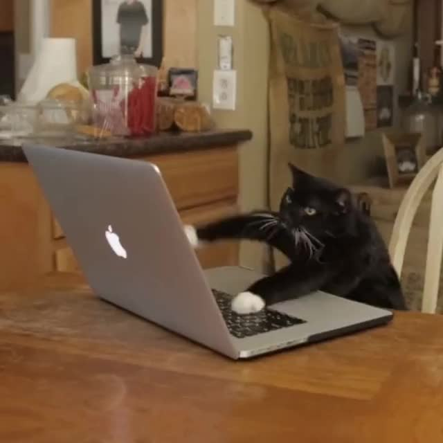Watch Aaron's Animals - Facebook Hacker GIF on Gfycat. Discover more Account, Bully, HACKER, When, aarons, facebook, fat, hack, hacks, prince, re, someone, you, your GIFs on Gfycat