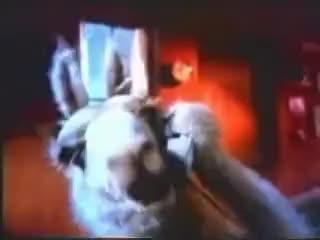 Watch this llama GIF on Gfycat. Discover more llama, llamas GIFs on Gfycat