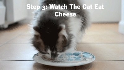 Food, Food & Wine, Food & Wine Magazine, Wine, animals, cat, cats, cheese, funny gif, fwpets, gif, gifs, parmesan, pet, pets, FOOD & WINE GIFs