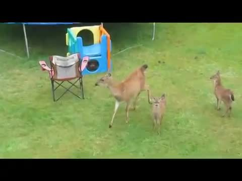 awwgifs, Otter tries to play with a family of deer (reddit) GIFs