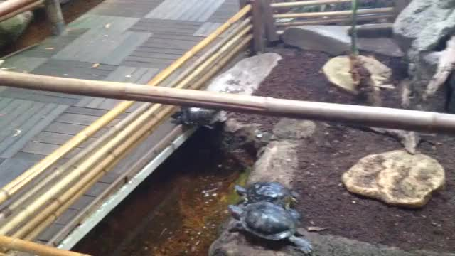 Watch Turtle derp (reddit) GIF on Gfycat. Discover more related GIFs on Gfycat