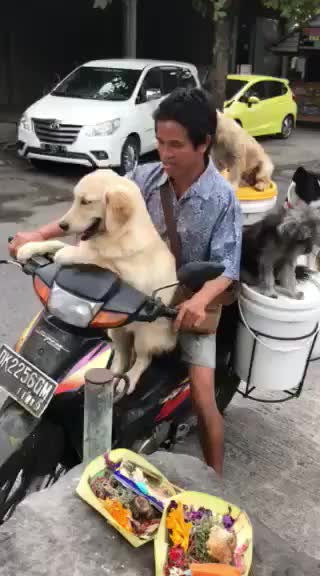 Every morning this farmer takes his family out to local restaurants to get scraps to compost, 10/10 family GIFs