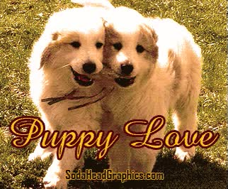 Watch and share Puppy Love GIFs on Gfycat