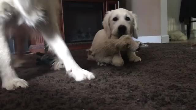 Watch and share Dog Photo Bombs Hilariously GIFs on Gfycat