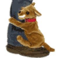 Watch and share Dog Humping Leg Photo: Dog Humping Leg Humdog_thu.gif GIFs on Gfycat