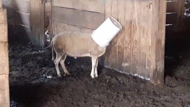 Watch and share Bucket Head GIFs by Crazy Cody's Creatures  on Gfycat
