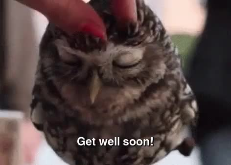 Watch this get well soon GIF on Gfycat. Discover more Get well soon, aww, cute, get better, get better soon, get well, owl GIFs on Gfycat