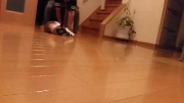 Watch and share Japanese Cat Curling GIFs by hexcell on Gfycat