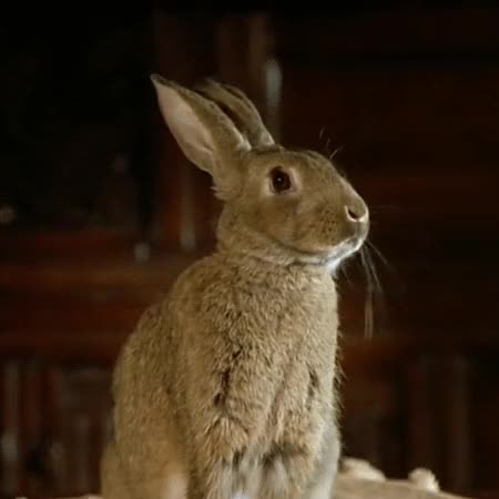 Watch and share Rabbit GIFs and Bunny GIFs on Gfycat
