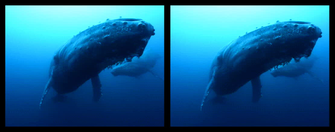 blue whale, crossview, Blue Whale (Crossview Conversion) GIFs