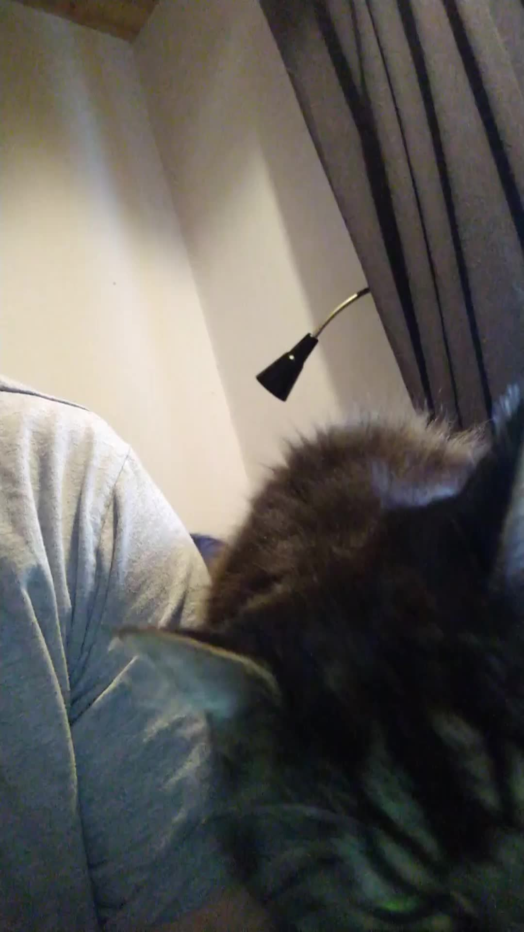 kitty GIFs