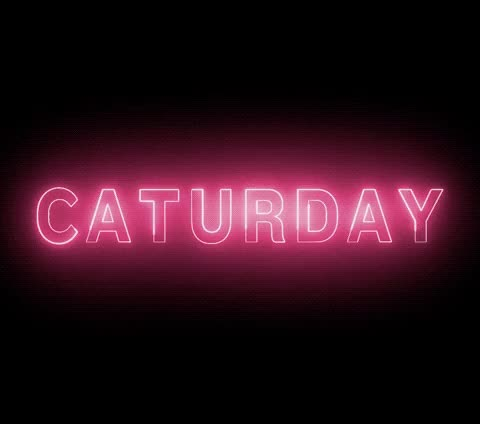 Watch this saturday GIF by The GIF Smith (@sannahparker) on Gfycat. Discover more adventures once had, cat, caturday, saturday GIFs on Gfycat