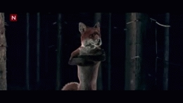 gif, gifs, norweigan, the fox, ylvis, ylvis the fox, Raining Foxes GIFs
